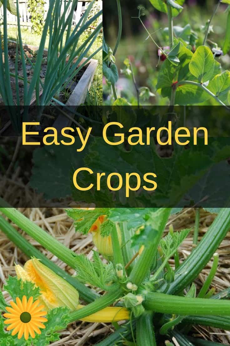 Easy garden crops