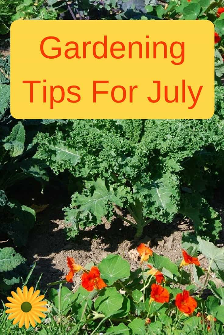 Here are some gardening tips for July to make your life in the garden easier.