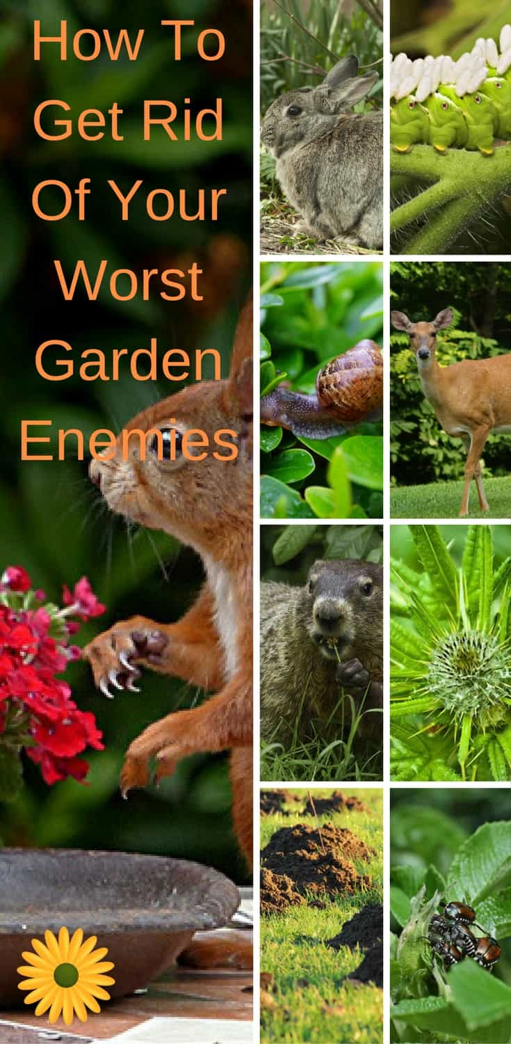 How to get rid of your worst garden enemies, no matter how bad they are, so you can enjoy your beautiful garden.
