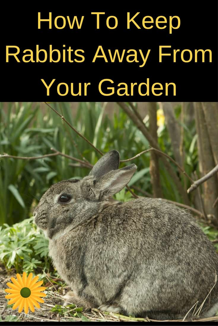 How to keep rabbits away from the garden - How to keep rabbits out of a garden ...