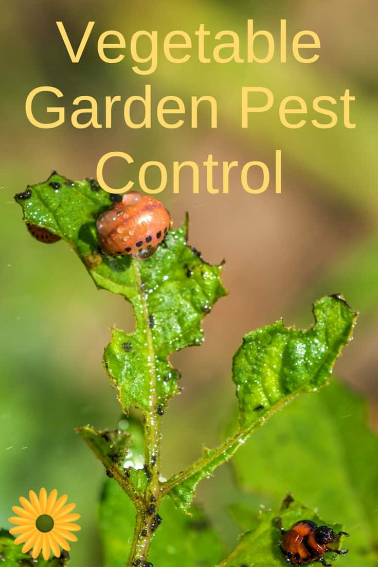 Vegetable Garden Pest Control