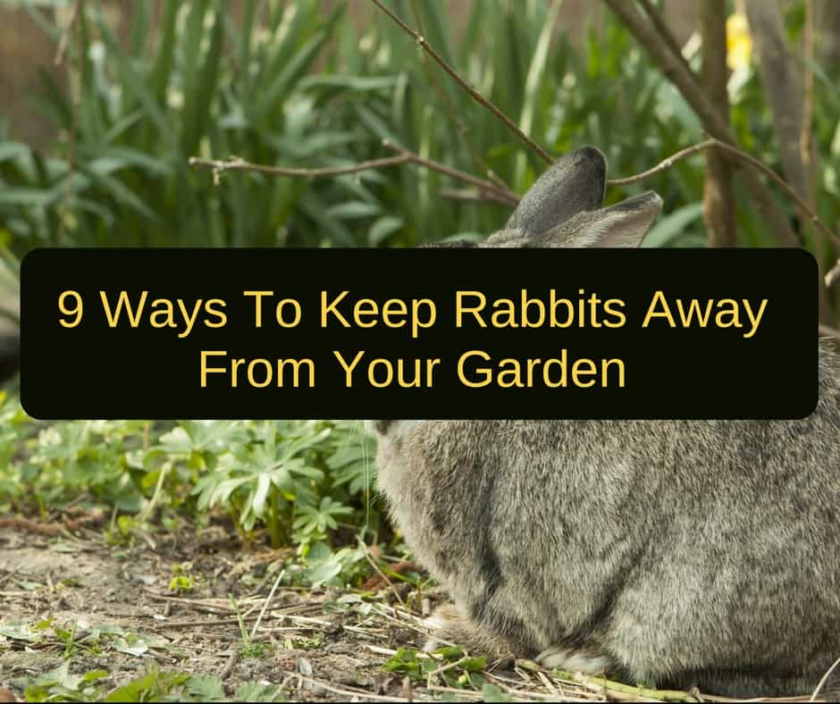 How to keep rabbits out of the garden 9 easy ways - How to keep rabbits out of a garden ...