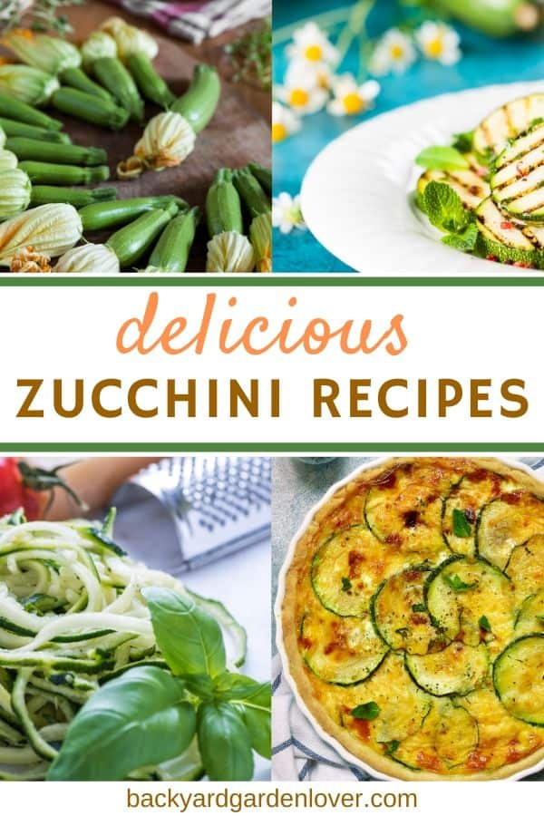 Delicious zucchini recipes