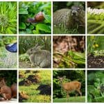 Your Worst Garden Enemies and How to Get Rid of Them