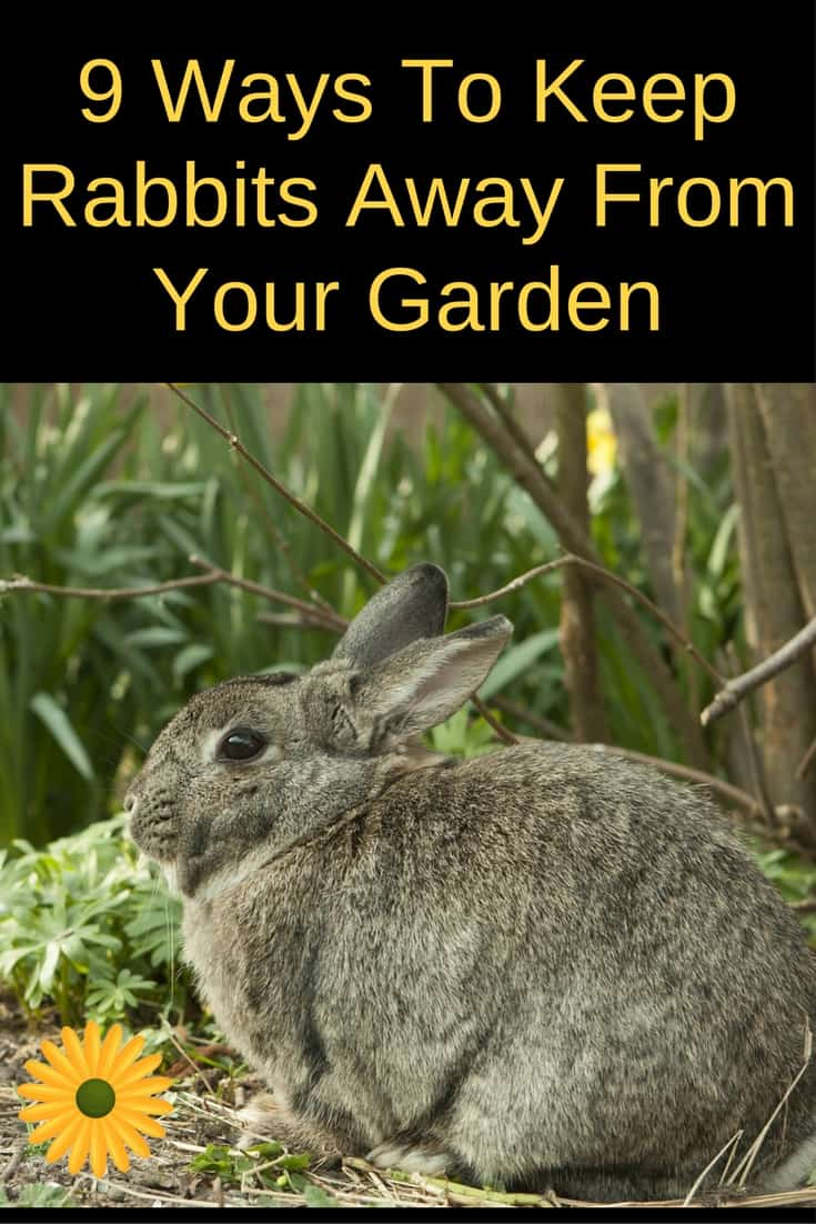 How to keep rabbits away from the garden - How to deter rabbits from garden ...