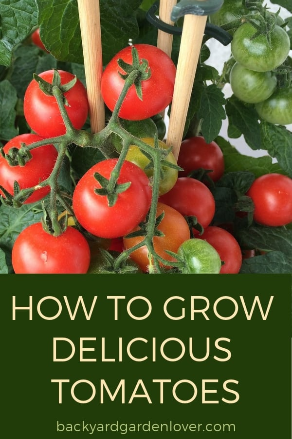 Every gardener needs to grow at least a few tomato plants. Need some help? Here's my quick how to grow tomatoes guide that will give you tips on growing tomatoes in the garden, in containers, indoors, vertically and more. #howtogrowtomatoes #tomatoes #gardening #organicgarden #growyourown #vegetablegardening #vegetablegarden