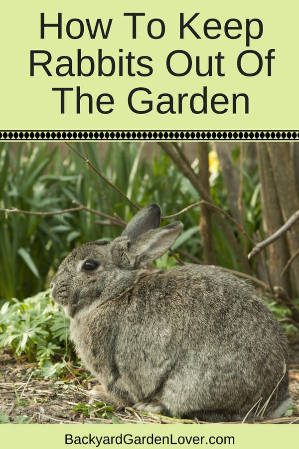 Learn how to keep rabbits out of the garden and keep your backyard plants safe with these 9 easy tips. If you're tired of rabbits eating your vegetables and flowers, you'll LOVE these 9 ways to get rid of rabbits from your garden