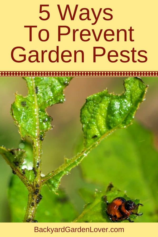 5 ways to prevent garden pests