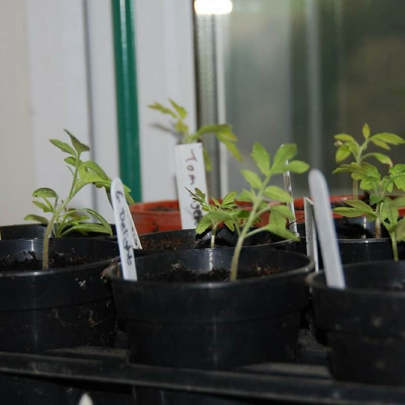 Grow young seedlings in a warm sunny location