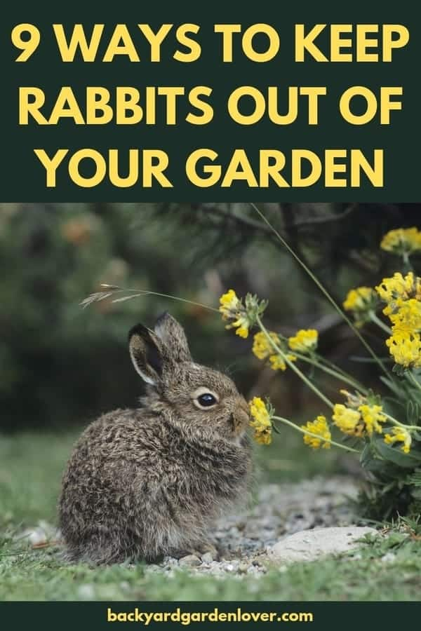 Are you tired of finding your flowers and vegetables chewed up by rabbits? Check out these 9 easy ways to keep rabbits out of your garden. #rabbits #rabbitsinthegarden #gardenpests #gardeningtips #pestfreegarden #keeprabbitsoutofmygarden #rabitrepellent