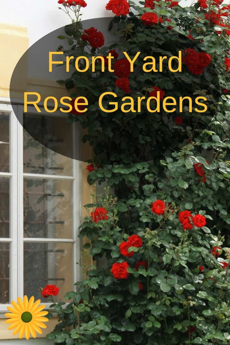 Ever dreamed of starting your very own rose garden? Here's how!