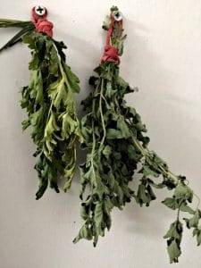 Parsley and oregano hanging to dry