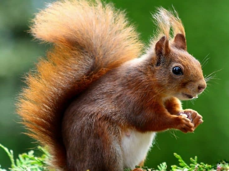 How To Keep Squirrels Out Of The Garden