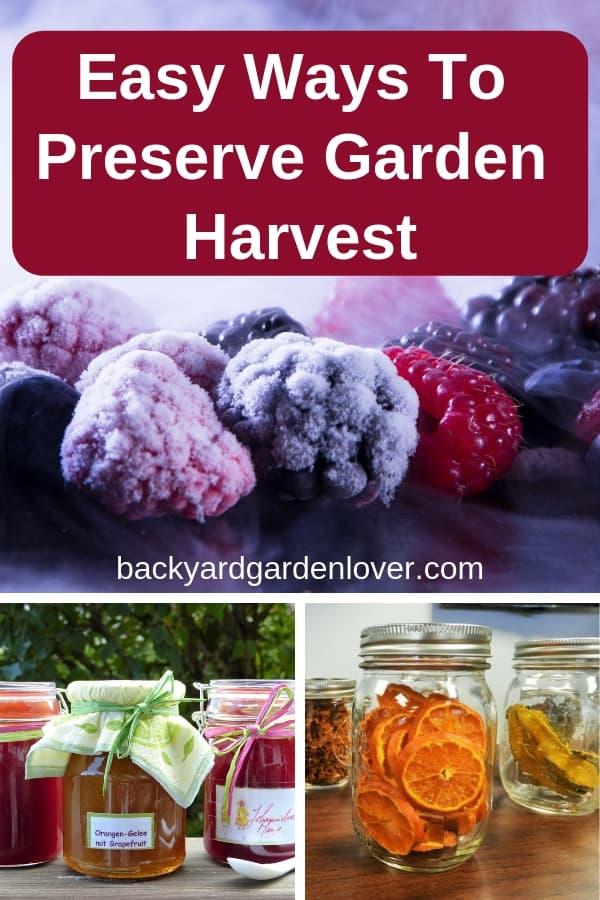 Easy ways to preserve garden harvest. #harvest #preserveharvest #winterfood #bgl #homesteading #homesteader #freezingfood #canning #dehydrating