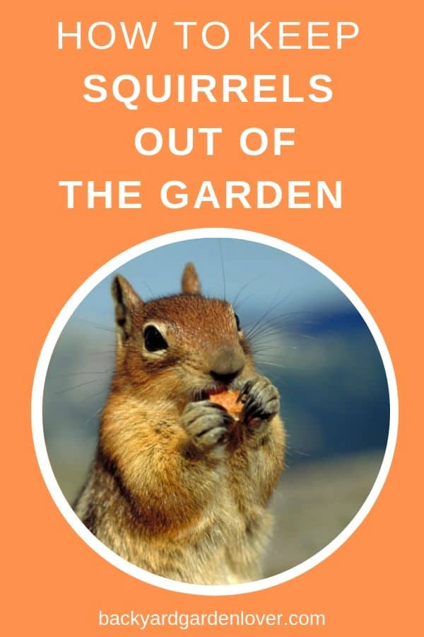 Learn how to keep squirrels away from your garden. #squirrels #garden #gardening #gardenpests