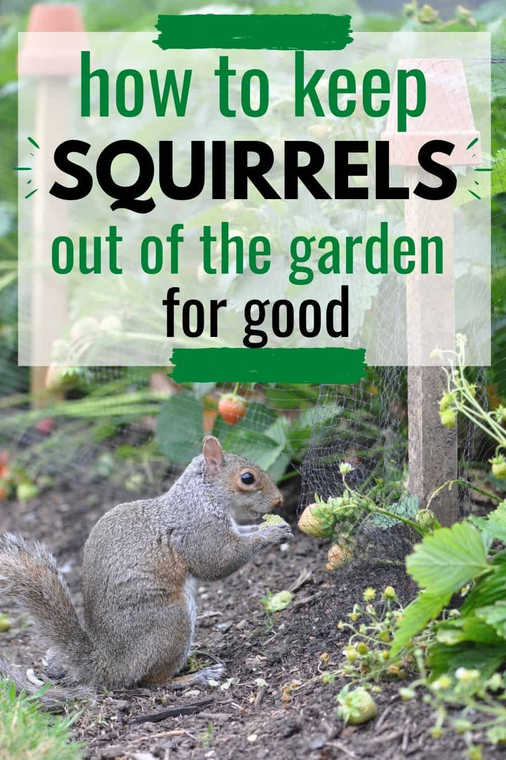 How to keep squirrels out of the garden for good