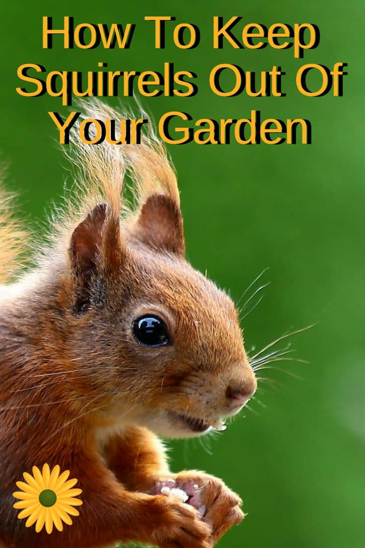 Here are a few suggestions for learning how to keep squirrels out of the garden