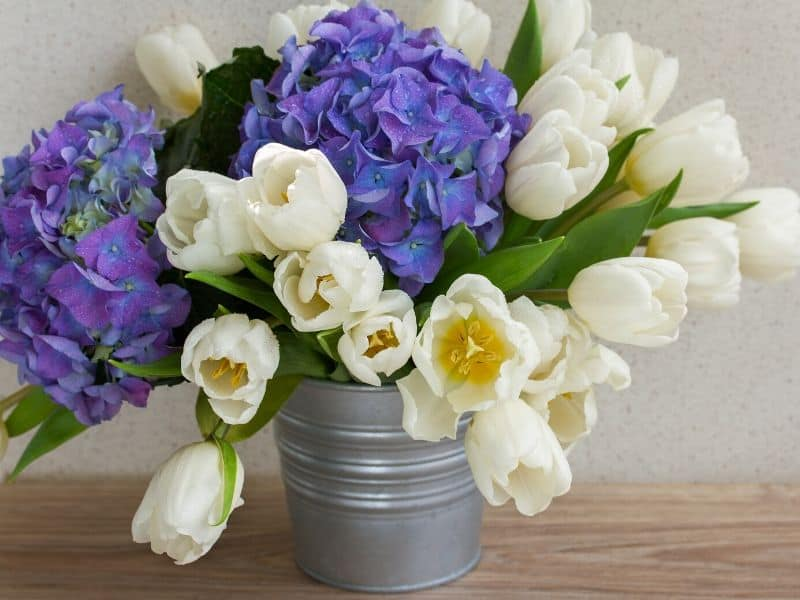 Purple hydrangeas and white tulips in a metal pail