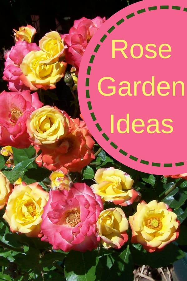 Looking to add some curb appeal to your home? Here are some rose garden ideas you can add to your landscape to quickly enhance your front yard look. See lots of rose pictures for inspiration: some in flower beds, some in containers, and some climbing up on trellises.