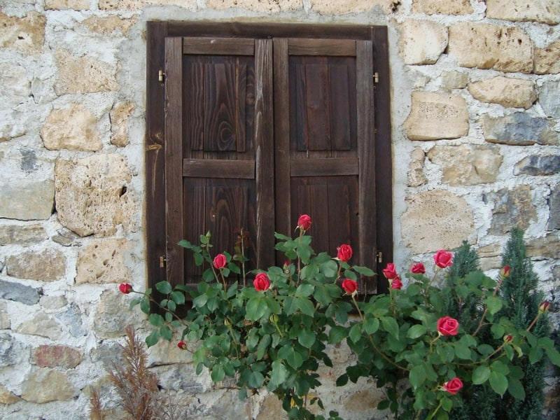 Roses framing an old wall window