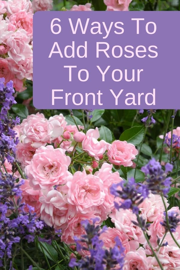 Are you looking for ways to add some beauty to your front yard? Roses can transform your garden into an instant romantic escape, or create an enviable curb appeal. Here are some ways to add roses to your front yard