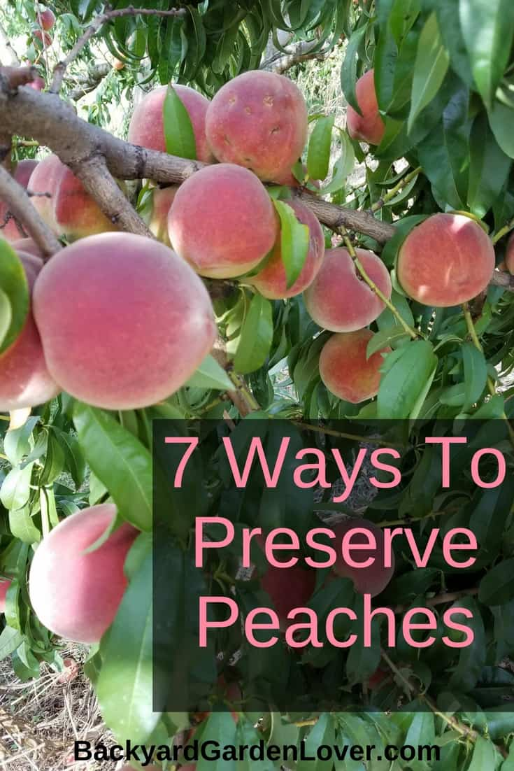 Savor the delicate aroma of peaches year round. these are my favorite ways to preserve peaches