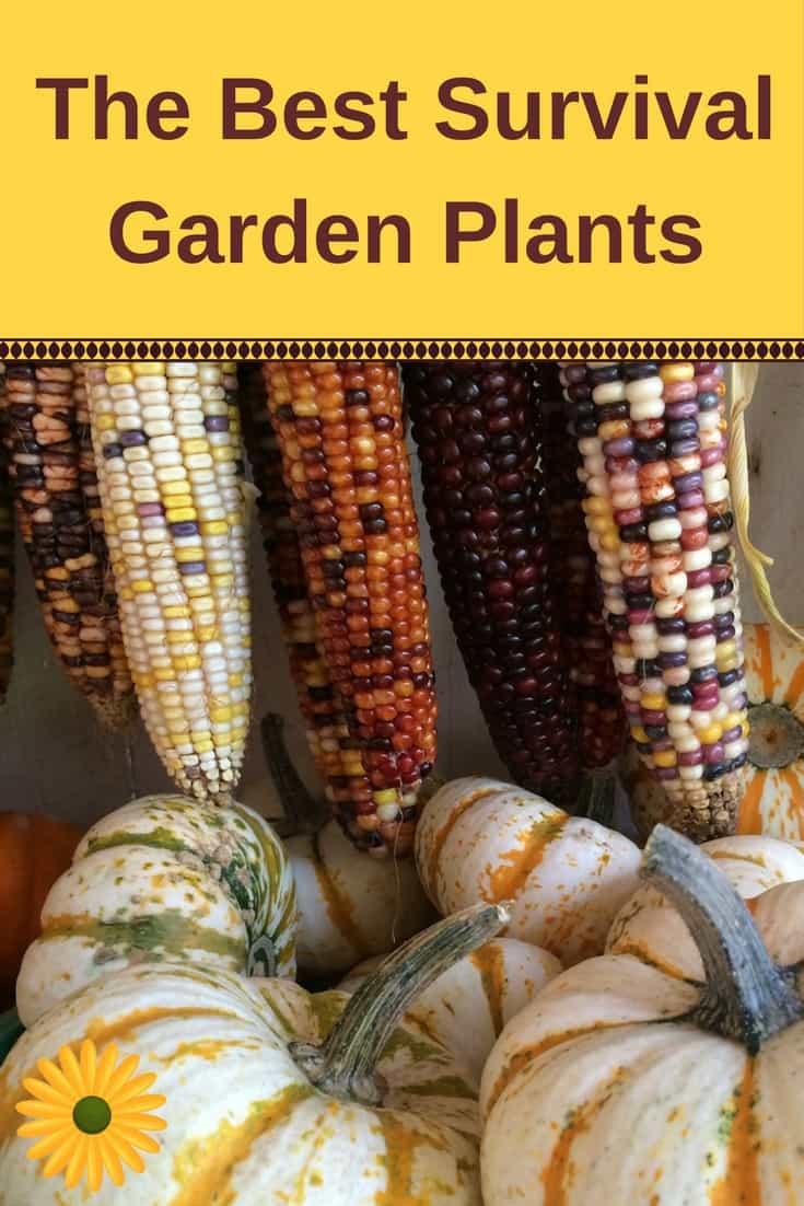 the best survival garden plants backyard garden lover