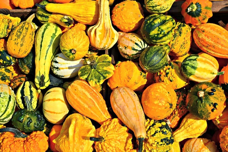Beautiful selection of gourds