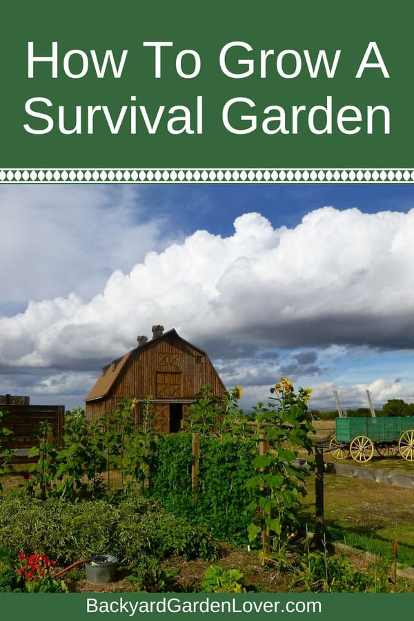 Here's how to grow a survival garden on your homestead. There's a list of vegetables that are most suitable for emergency preparedness. You can grow these in your backyard, and some even hidden in your flower beds and landscaping. Just a few simple tips for anyone who wants to be prepared.