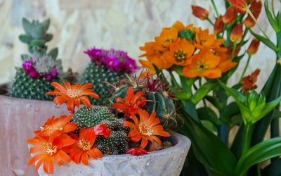 Bright, colorful indoor succulents