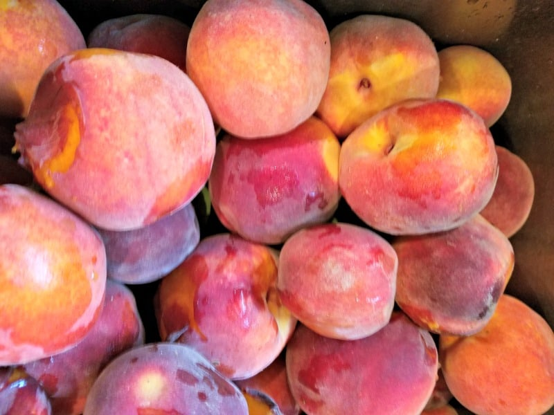 Peaches ready to be washed for winter preserving