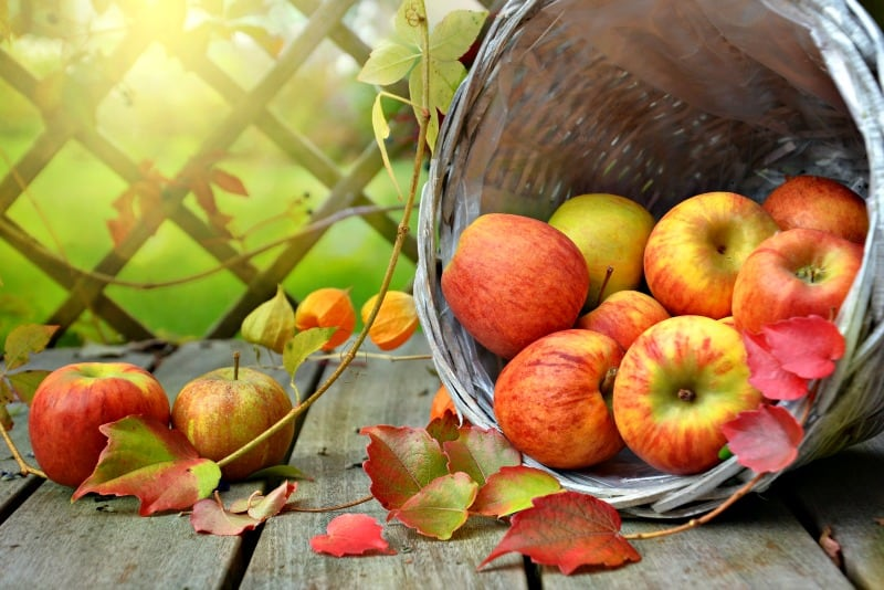 Basket full of apples. Learn what to do with apples