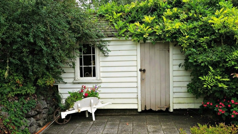 Hidden shed with lots of vegetation and a pop of color in a wheelbarrow painted white.