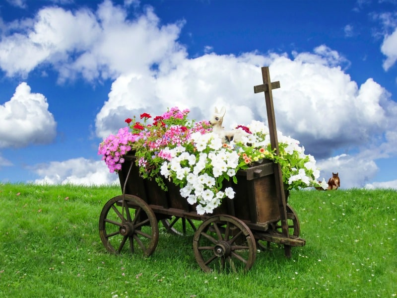 Lovely cart filled with colorful petunias
