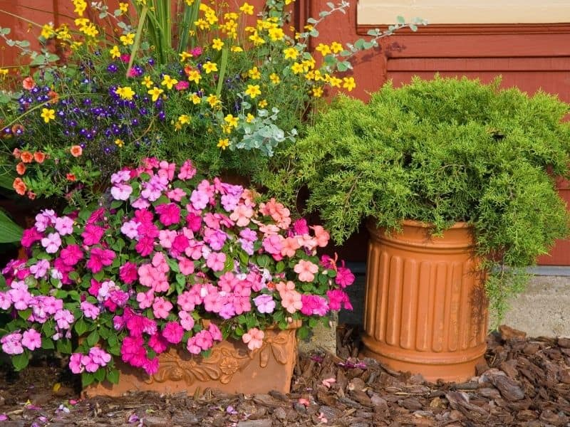 Beautiful flowers in containers