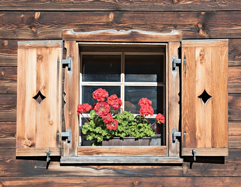 Shed window with wooden shutters and red pelargonium flowers