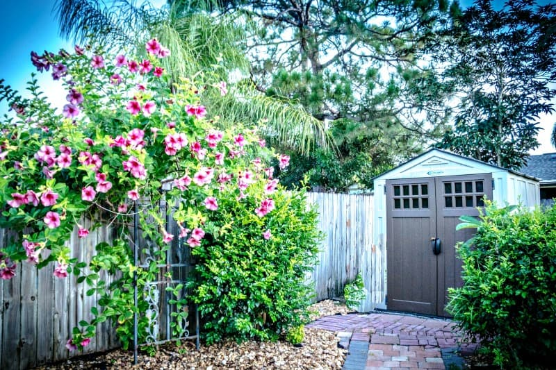 Rustic wooden shed with flower vines