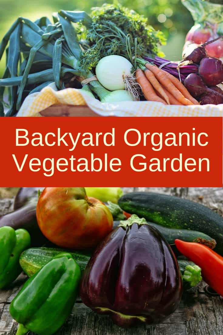 Here's all you need to know about growing your own backyard organic vegetable garden. #organicgardening #gardener #organic #gardentotable