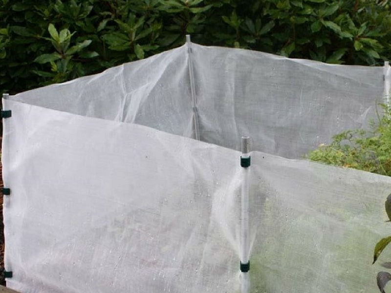Carrot fly screen used to protect carrots