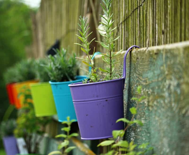 Cute herb containers hanging on a cement fence