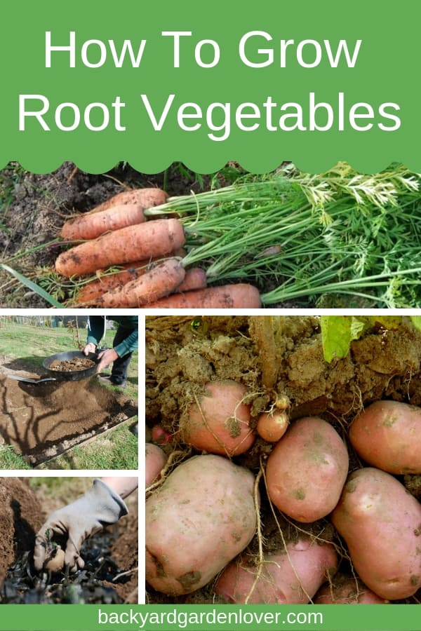collage of root vegetable pictures