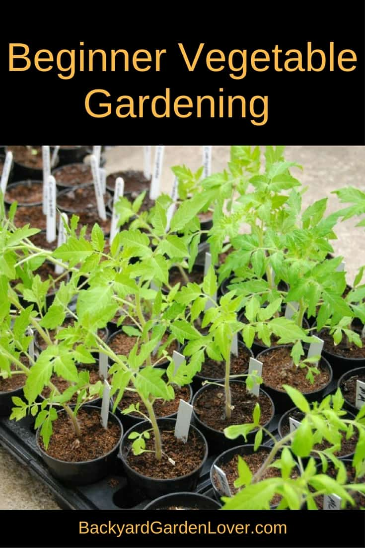 Check out these tips for a beginner vegetable garden