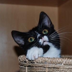 Cute cat in a basket