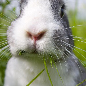 A close up of a bunny face