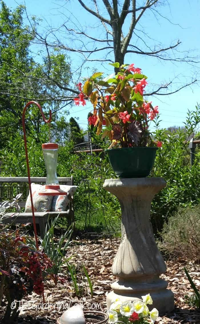 Bird bath transformed into a planter