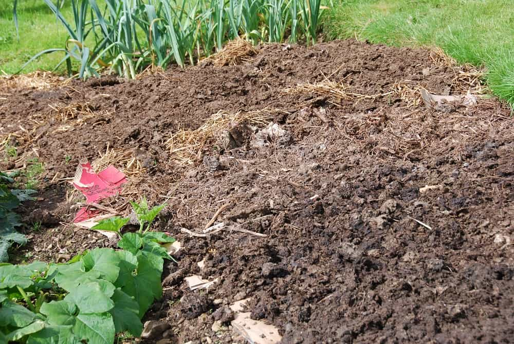 manure spread after crops die down