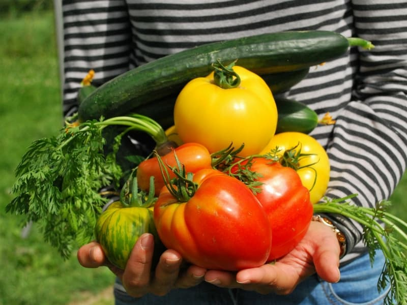 Freshly picked homegrown vegetables