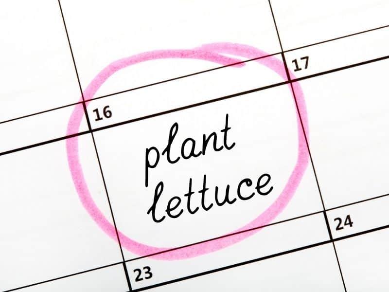garden calendar prompt to plant lettuce