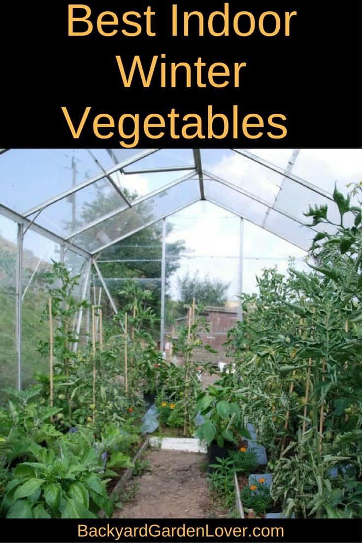 Did you know you could grow an indoor winter vegetable garden? Here's a list of veggies and herbs that grow well indoors.
