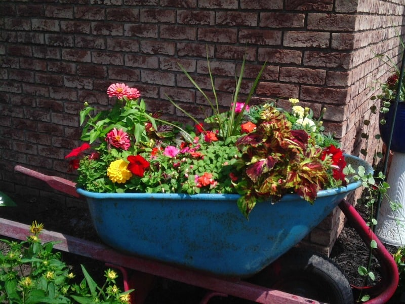 Old wheelbarrow filled with colorful flowers